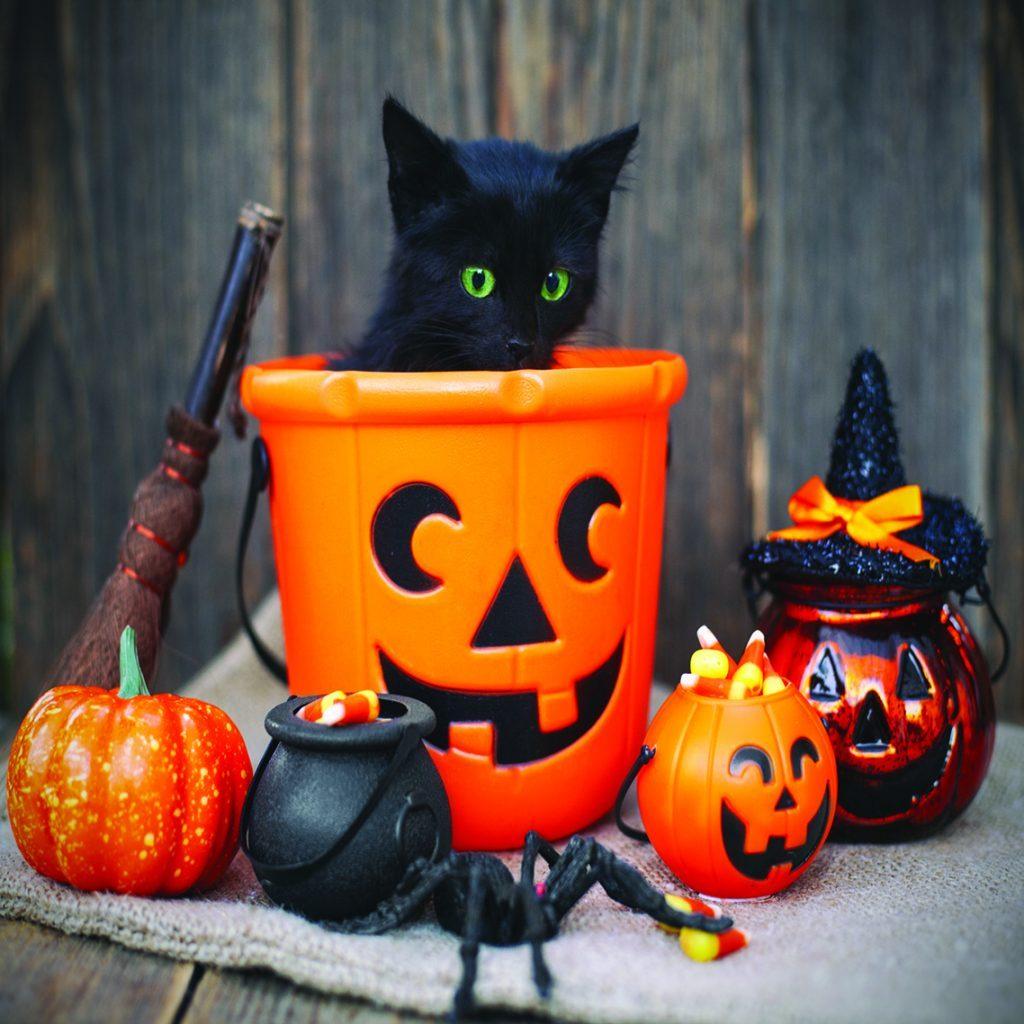 Halloween square